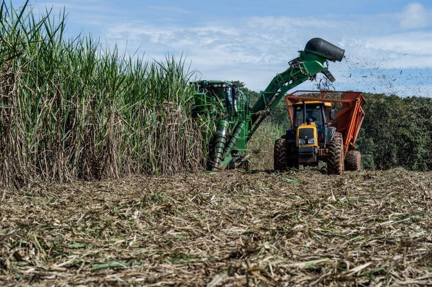 Cultivo de cana-de-açúcar tem maior grau de formalização