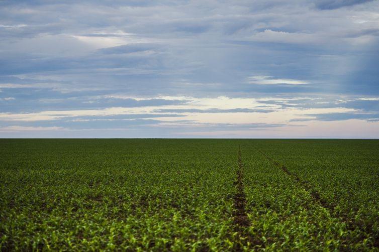Brasil deverá ter produção recorde de grãos na safra 2019/2020
