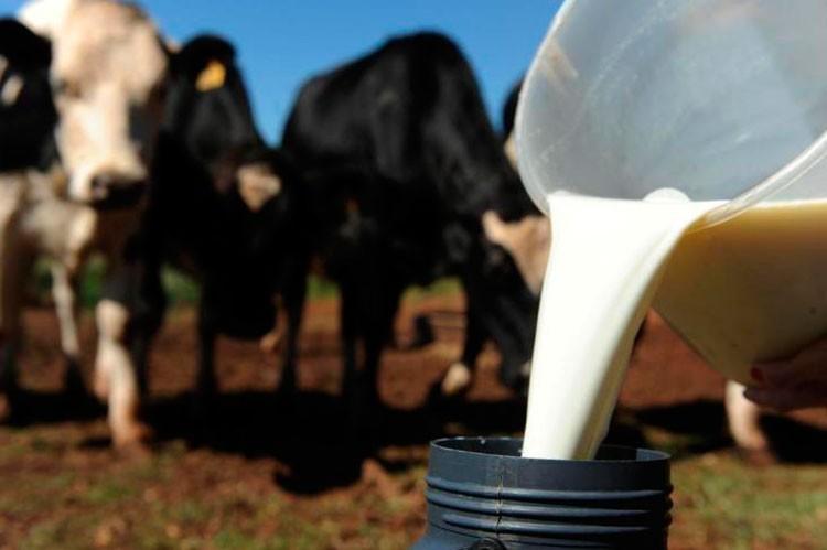 Preço médio do leite acumula alta de 21% desde o início do ano, diz Cepea