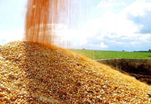 Saca do milho custa R$ 29 em Maringá