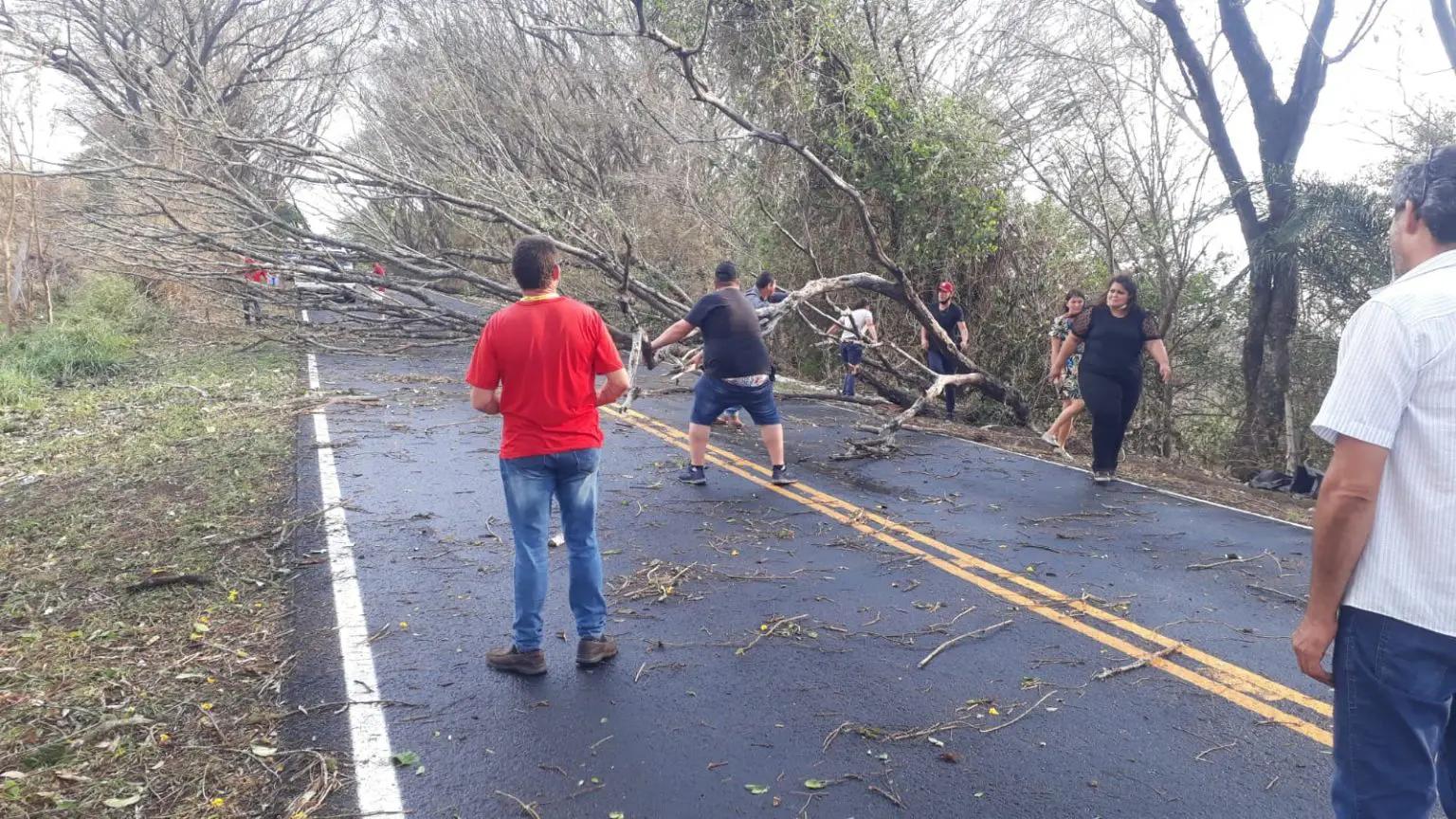 Árvore caída na rodovia em Grandes Rios – Foto: Blog do Berimbau