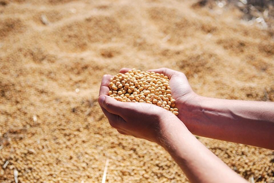Cotações futuras de soja iniciam com perdas na Bolsa de Chicago