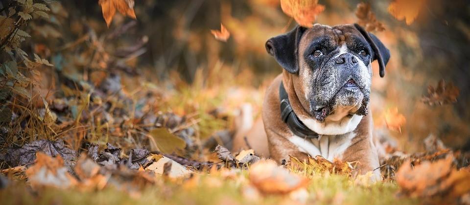Características do Outono podem causar doenças articulares e respiratórias