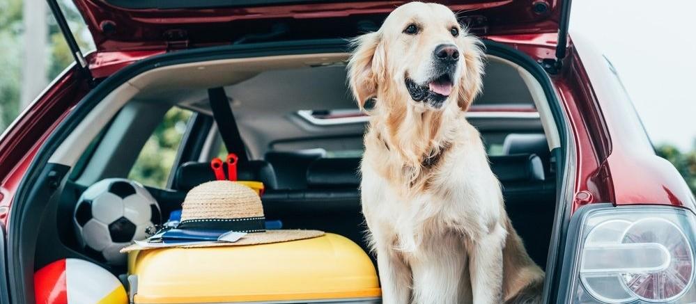 Viajar com animais: cuidados necessários para o transporte