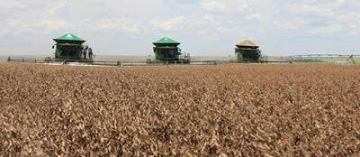Falta de chuvas e calor de dezembro provocou quebra nas lavouras
