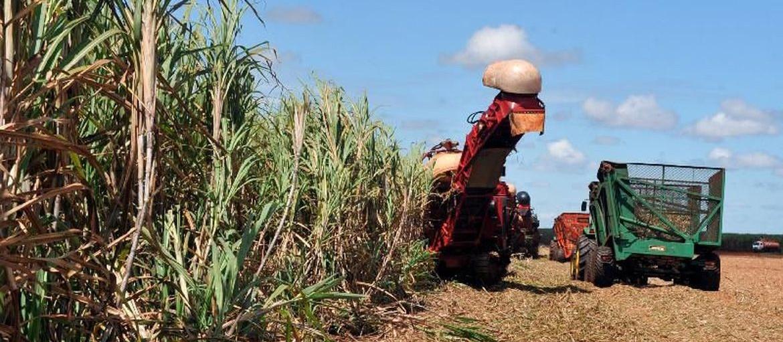 Programa integra produção de alimentos, carnes e grãos