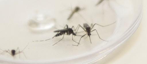 Maringá já tem 22 casos de dengue