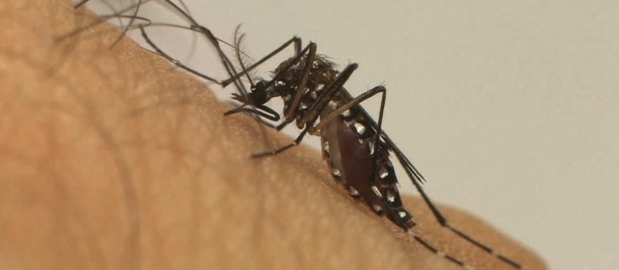 Dengue: Maringá registra um caso em uma semana