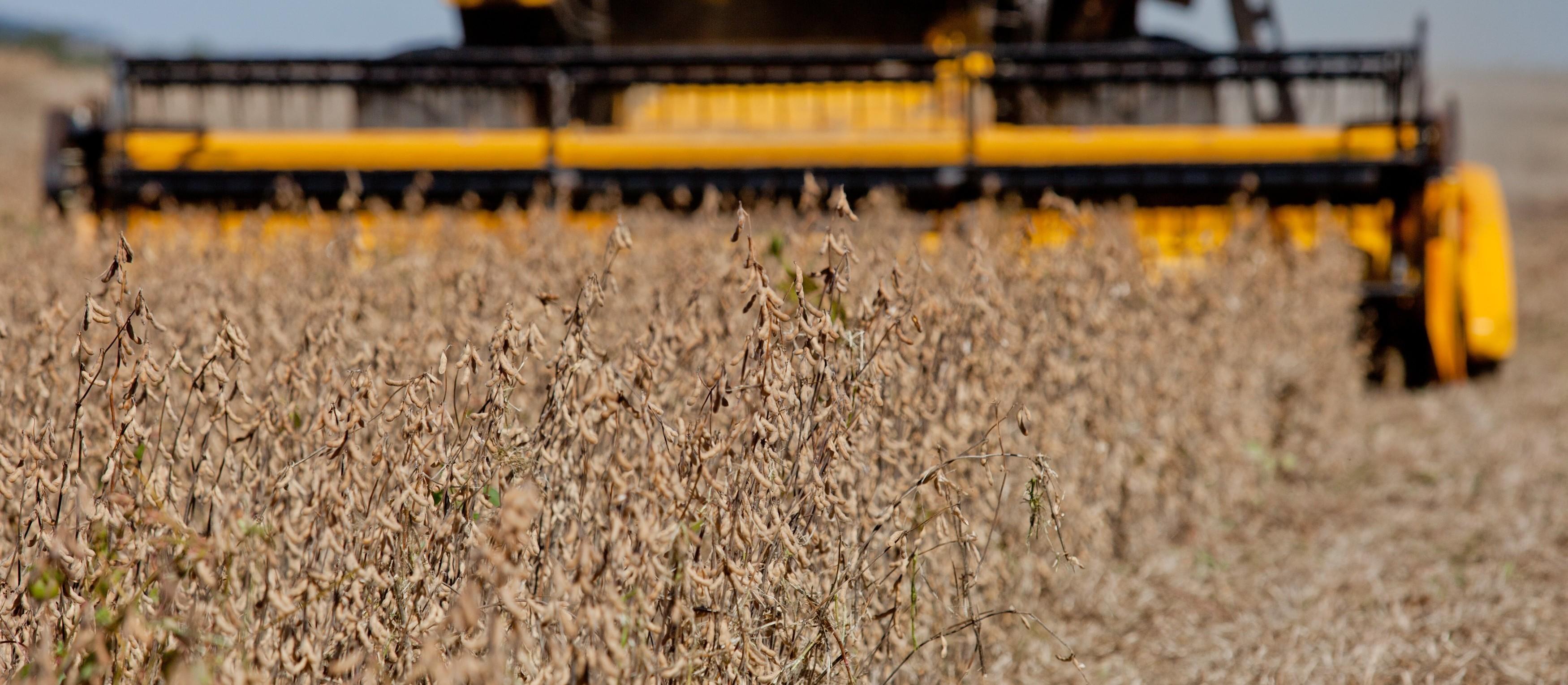 Safra de soja dos EUA em 2019/20 é estimada em 3,6 bilhões de bushels