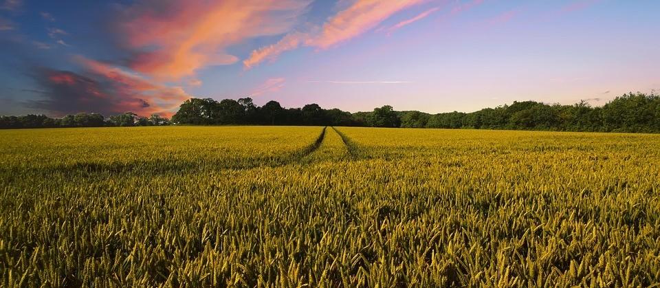 Senado aprova MP do Agro, com medidas econômicas para ajudar o produtor rural
