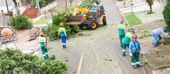 Prefeitura inicia cadastro de empresa para corte de árvores