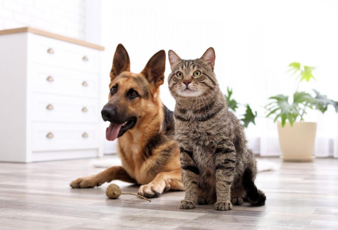 Sema contrata mais 6.872 castrações de cães e gatos