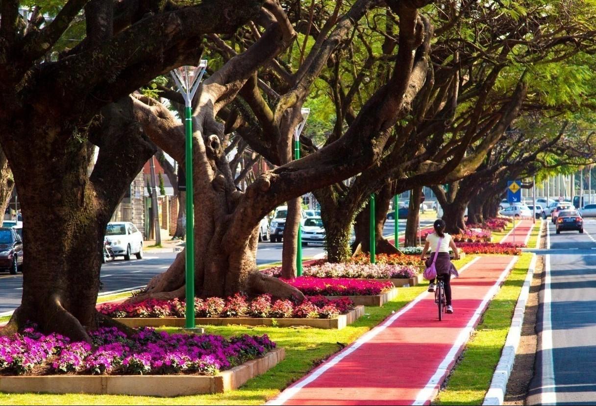 Audiência Pública do Plano de Arborização será na sexta-feira (27)