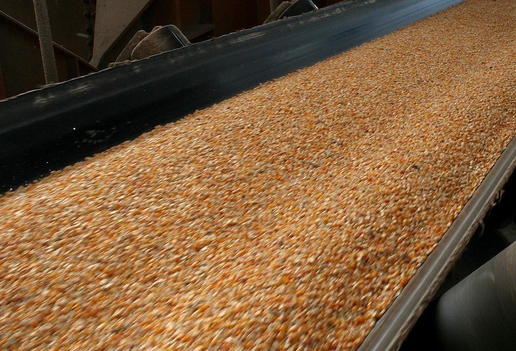 Preço do milho no Brasil recua 3% em três semanas