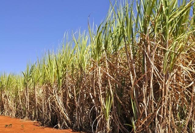 Setor sucroenergético poderá fortalecer programas de etanol na Ásia