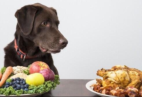 Dieta vegana para cães e gatos não é recomendada