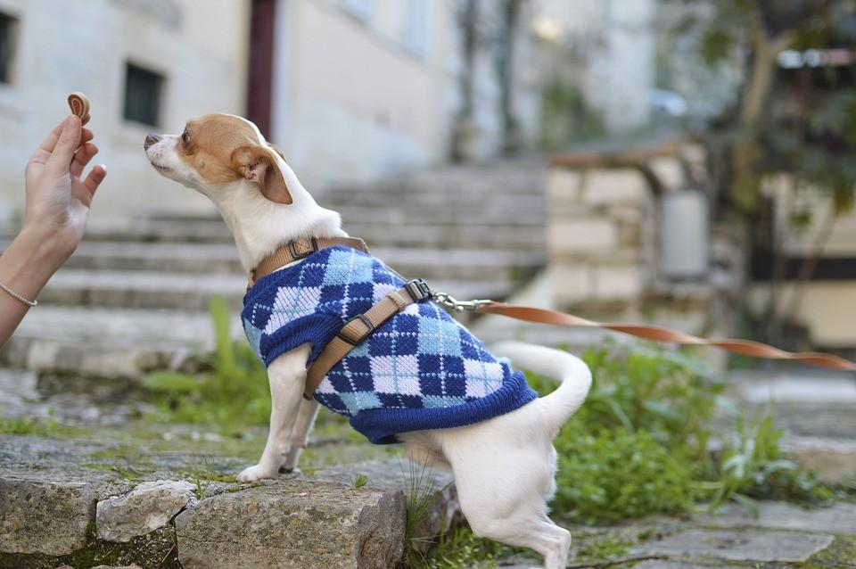 Roupas para animais de estimação: usar ou não usar?