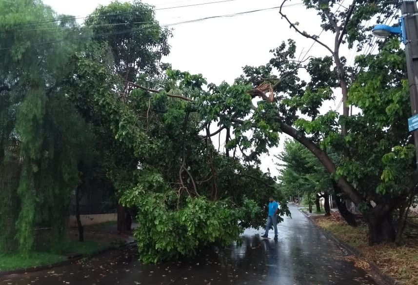 Equipes da Defesa Civil trabalham na remoção de árvore e galhos