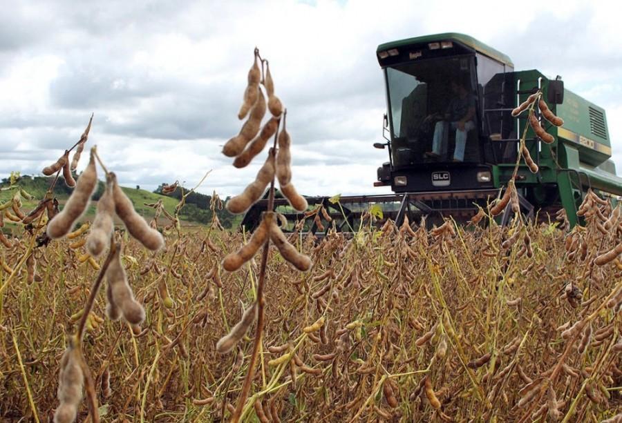 Safra de soja no Paraná registra perdas por falta de chuva