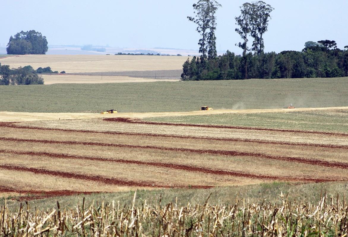 Paraná pode perder o 2º lugar na produção de soja para o RS