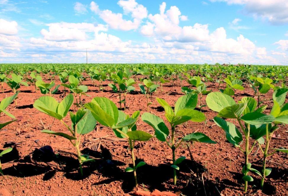Paraná deve semear cerca de 5,5 milhões de hectares com soja na safra 2019/20