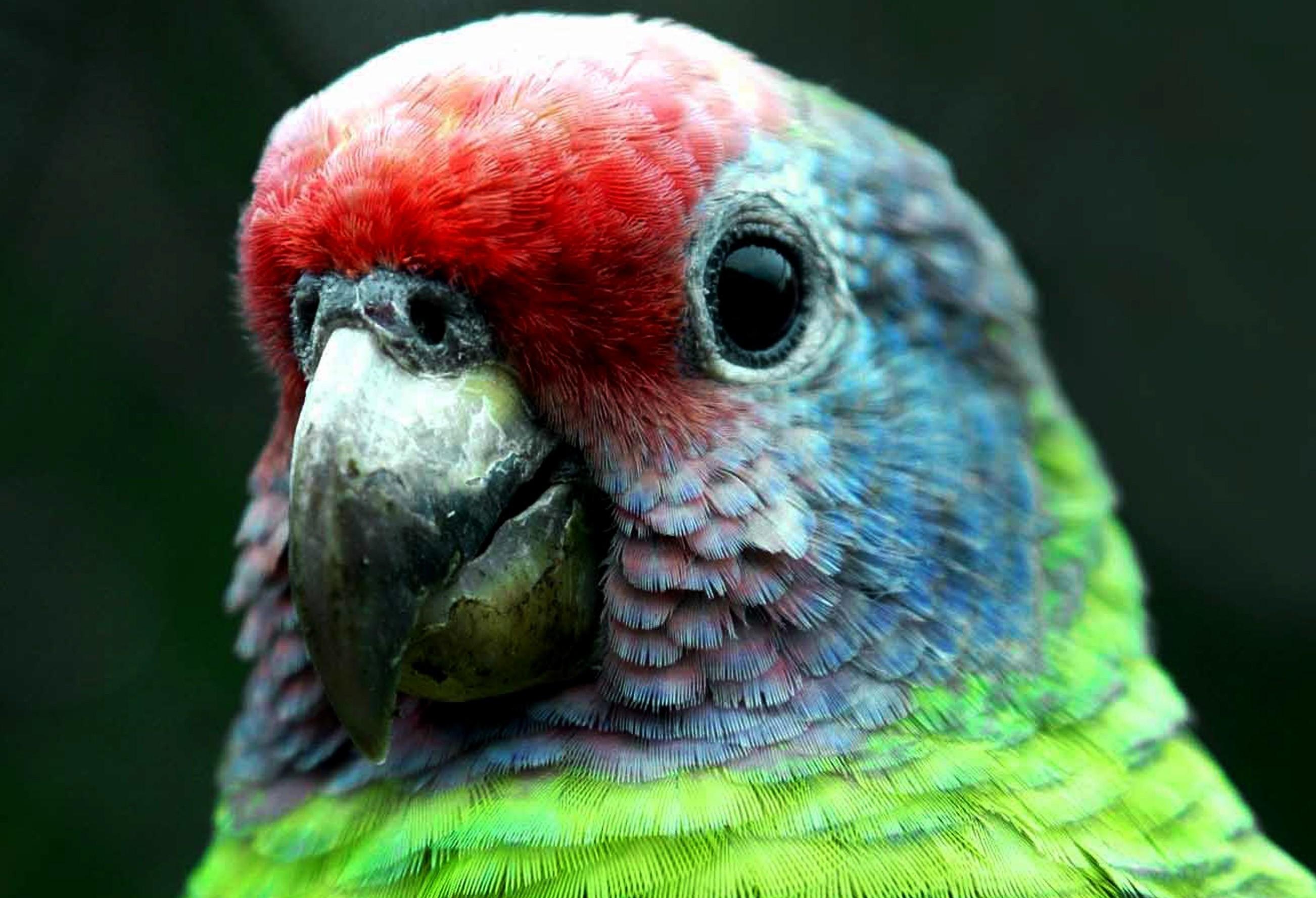 Pela primeira vez, população pode ajudar em lista de aves ameaçadas
