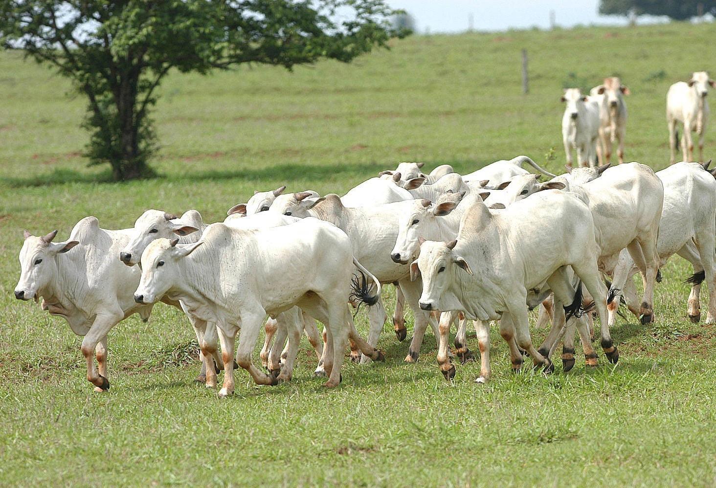 Produtores do Paraná têm até 30 de novembro para fazer atualização do rebanho