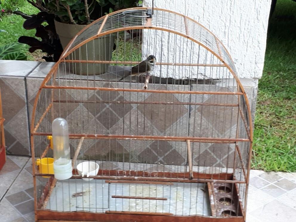 Com IAP em recesso, Polícia Ambiental faz autuação, mas não recolhe pássaros