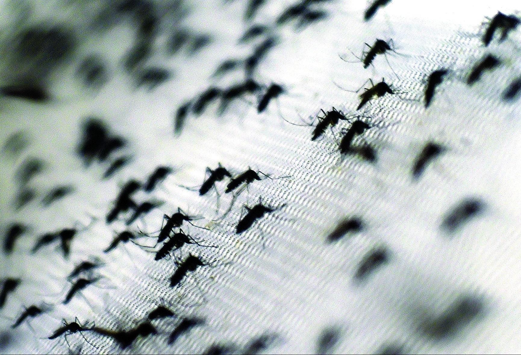 """Nova epidemia pode ser a """"maior de todas"""" diz especialista"""