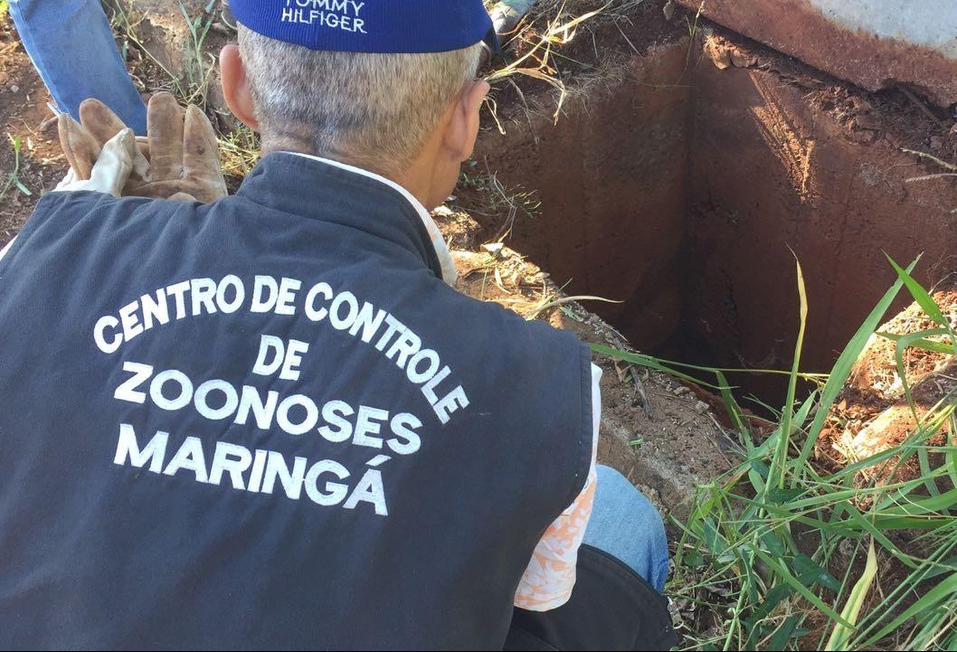Secretaria de Saúde caça escorpiões em bairros com grande número de reclamações