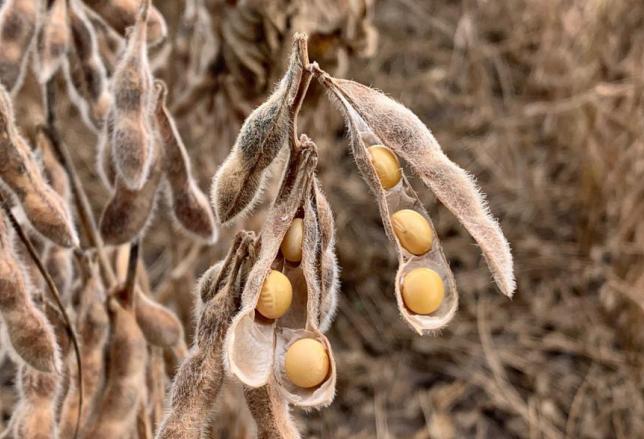 Cotações de produtos agrícolas: quarta-feira [18 de setembro]