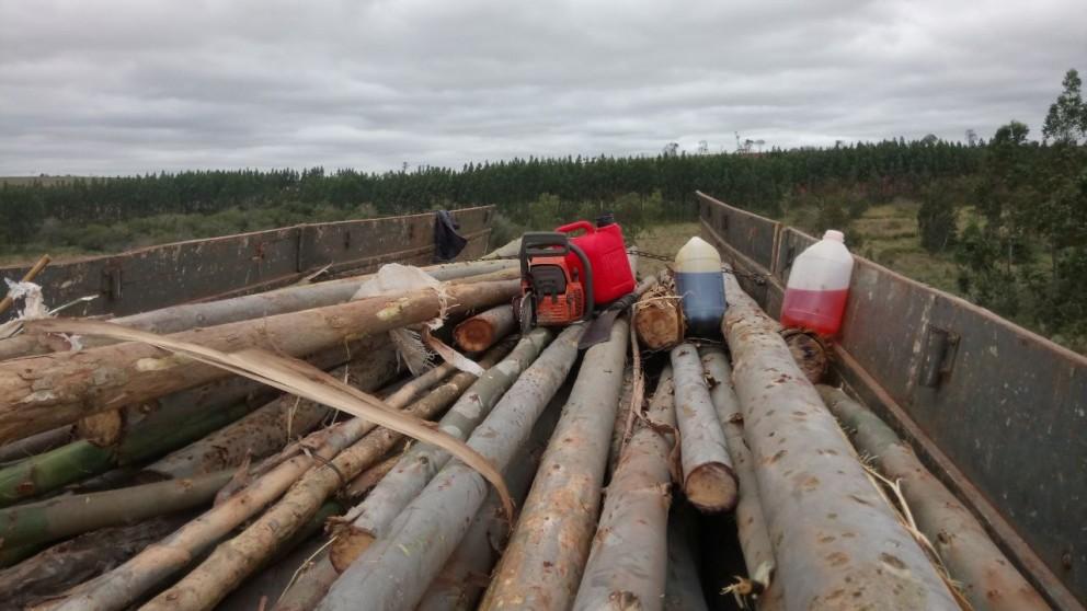 Cinco integrantes do MST são presos em flagrante por crime ambiental em Alto Paraíso, noroeste do Paraná