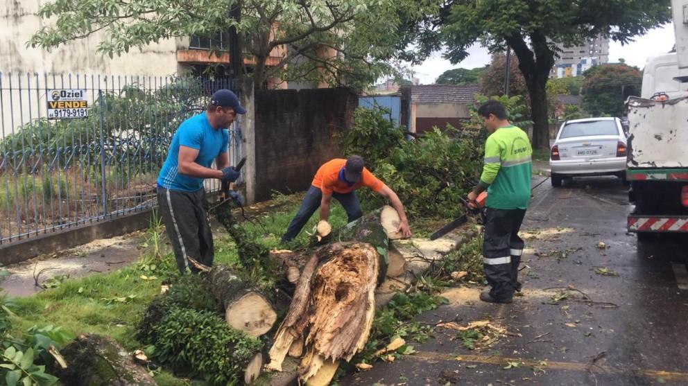 Defesa Civil estima queda de mais de dez árvores