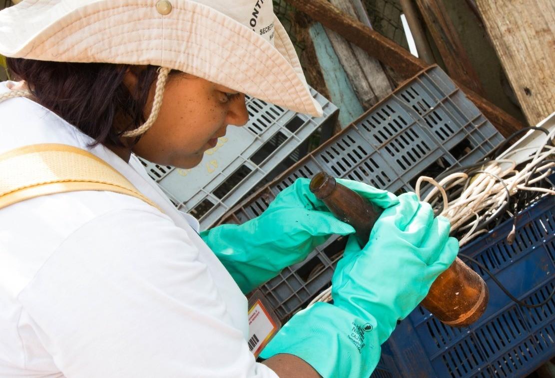 Saúde espalha armadilhas na zona norte de Maringá