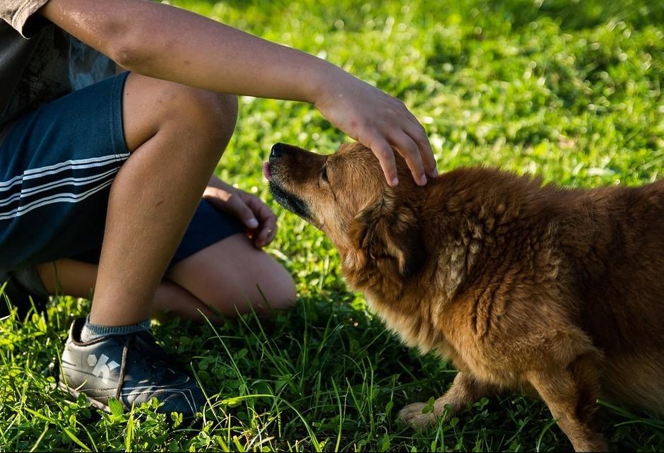 Amizade entre homem e cão é milenar
