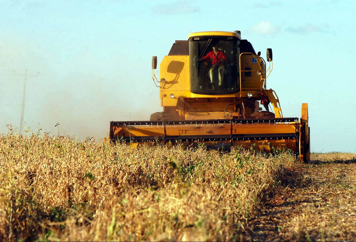 Intenso calor e chuva agrava situação de perda nas lavouras de soja do Paraná