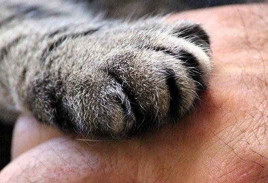 Gilson Aguiar: 'Há animais tratados como humanos e humanos como animais'