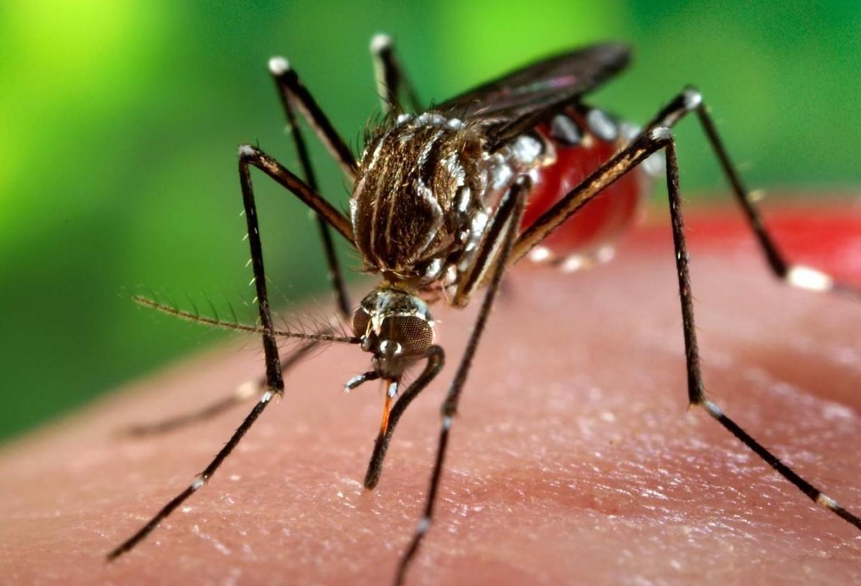 Secretaria de Saúde do Paraná confirma caso de chikungunya