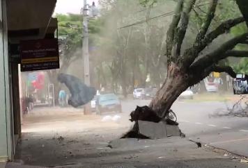 Registro impressionante do momento em que uma árvore cai