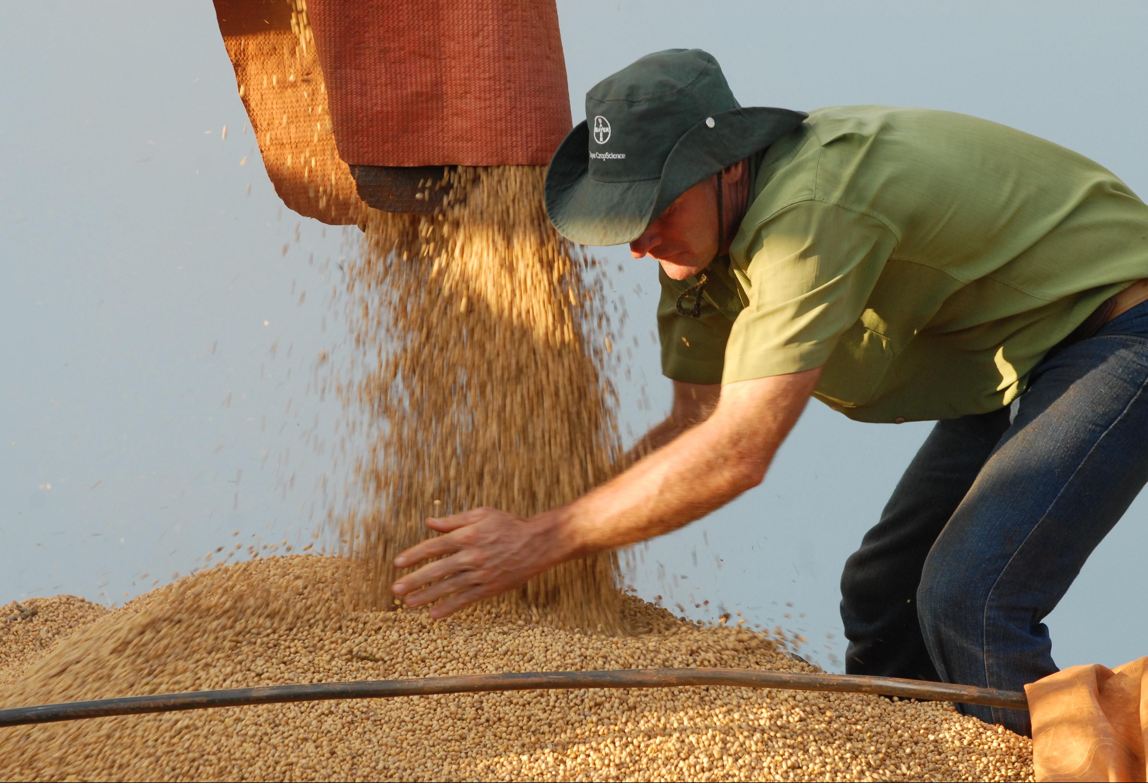 Comercialização de grãos está mais lenta que o normal