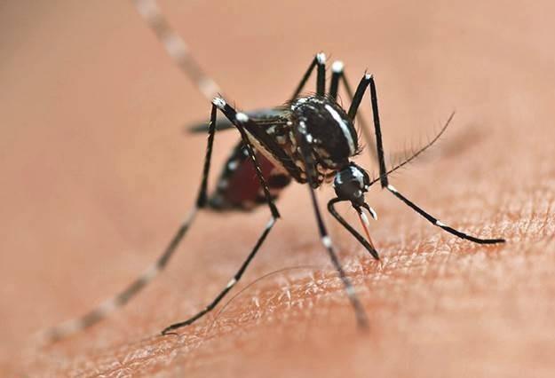 Maringá tem 110 casos confirmados de dengue