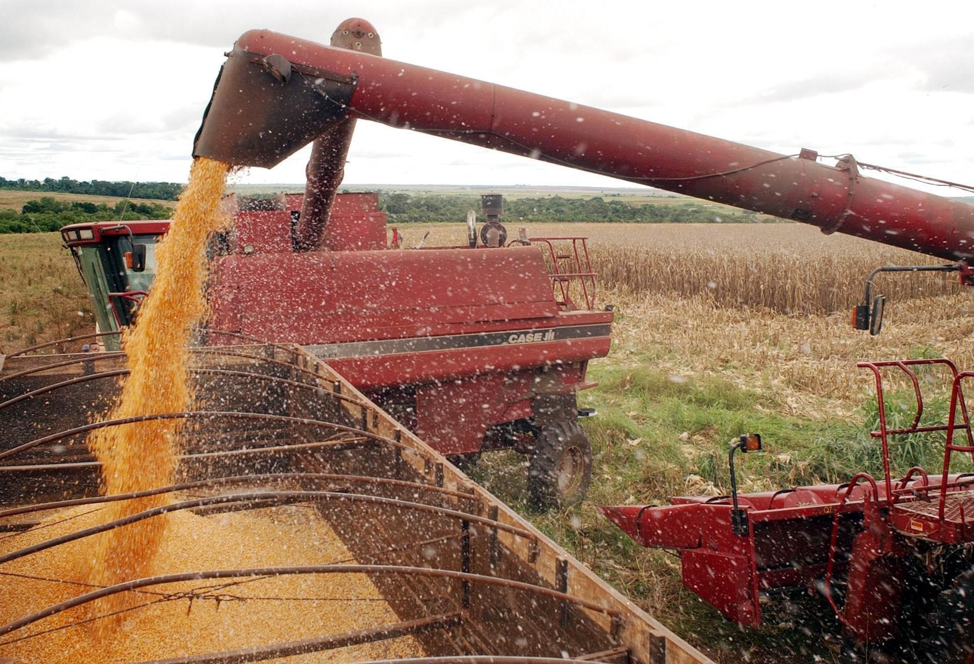 Brasil deverá colher 100,4 milhões de toneladas de milho
