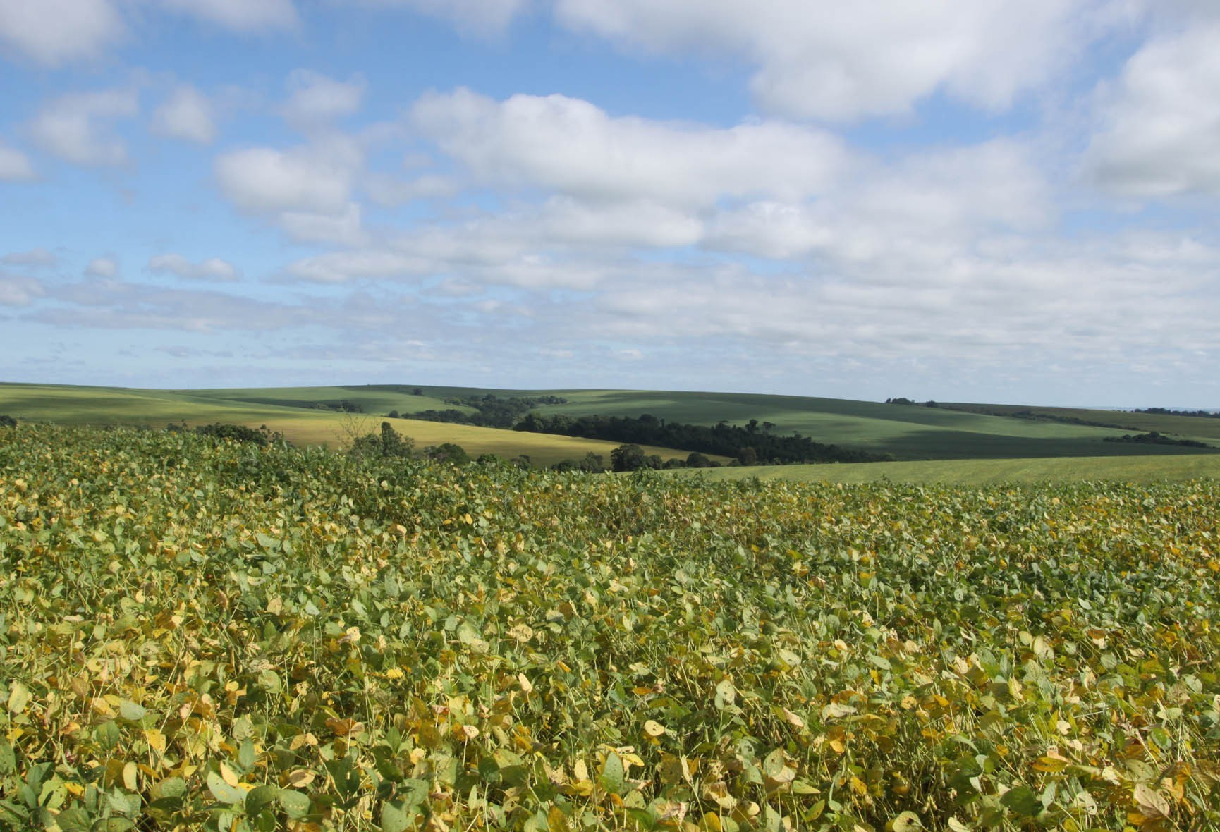 Paraná está em alerta por falta de chuva no plantio da soja