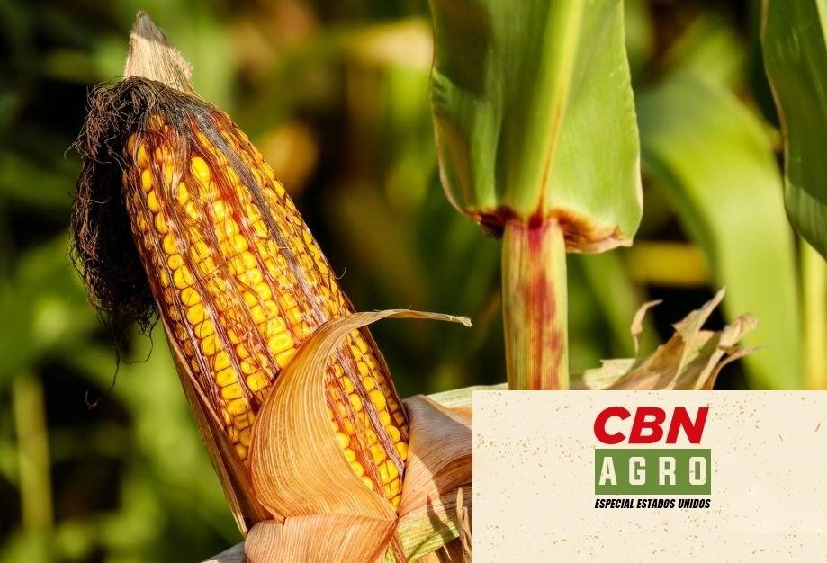 Produtor de milho tem rendimento de até 15 ton/hectare e está no top 20 dos EUA