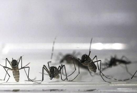 Maringá está com 233 casos positivos de dengue