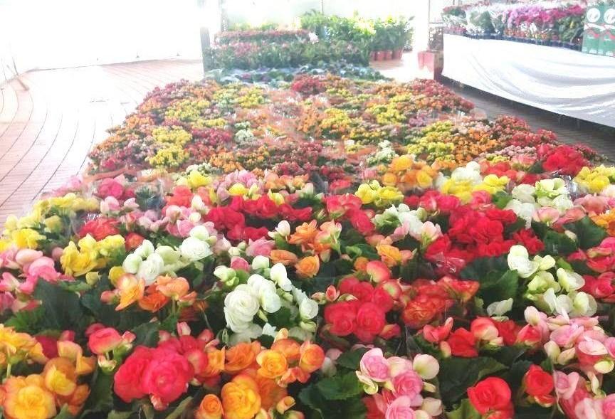 2ª  Maringá Flores e Jardins começa nesse sábado (02)