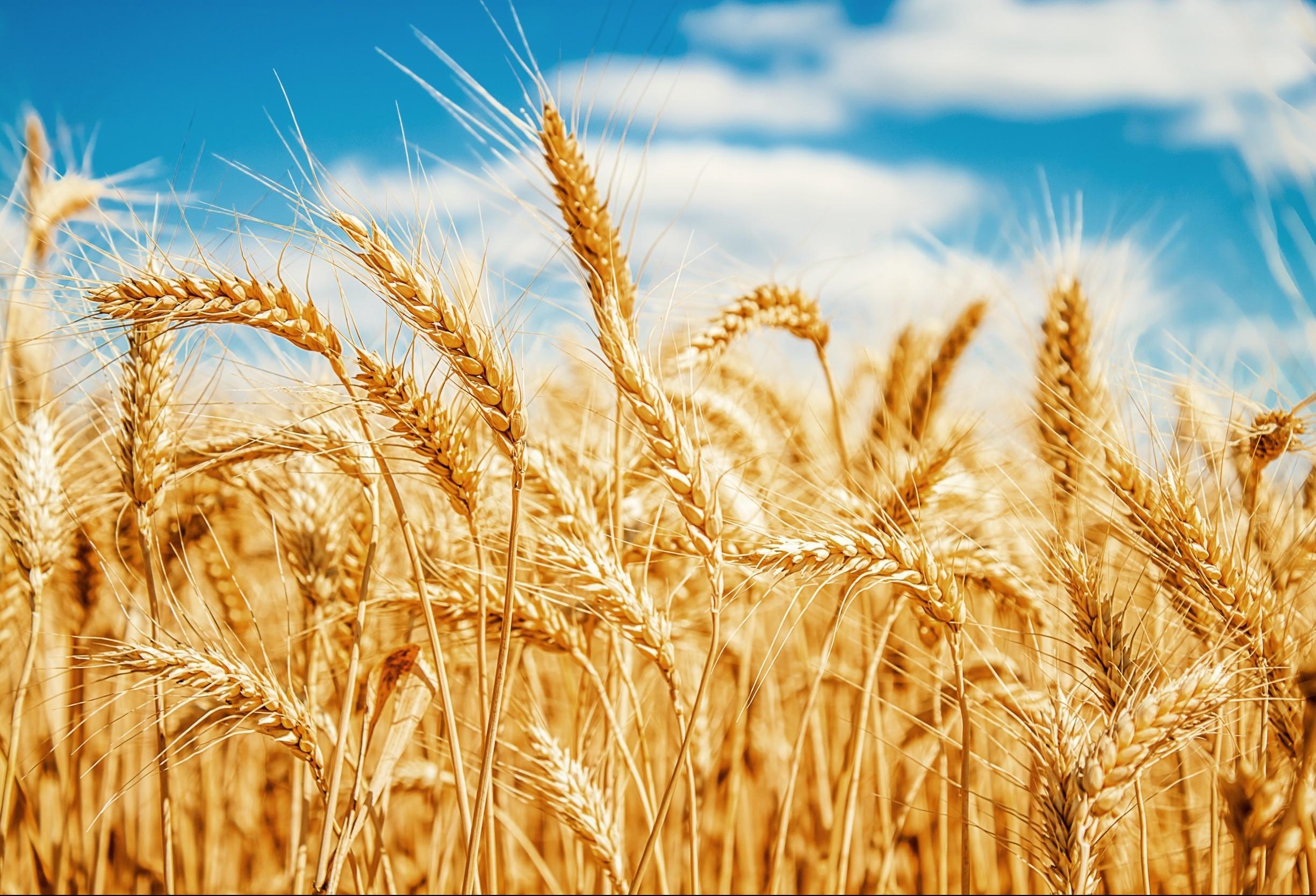 Cotações de produtos agrícolas: segunda-feira [16 de setembro]