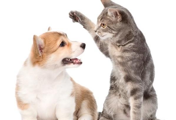 O que fazer quando os pets brigam por território?