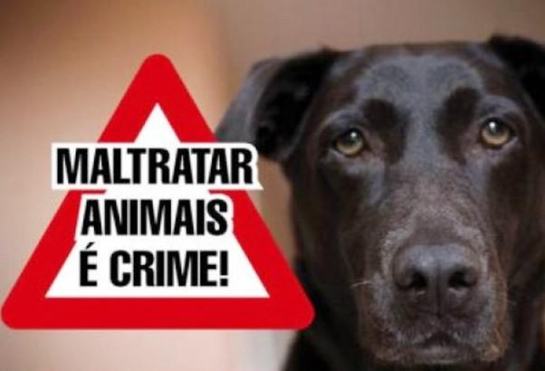 Lei contra maus-tratos de animais soma R$ 207 mil em multas