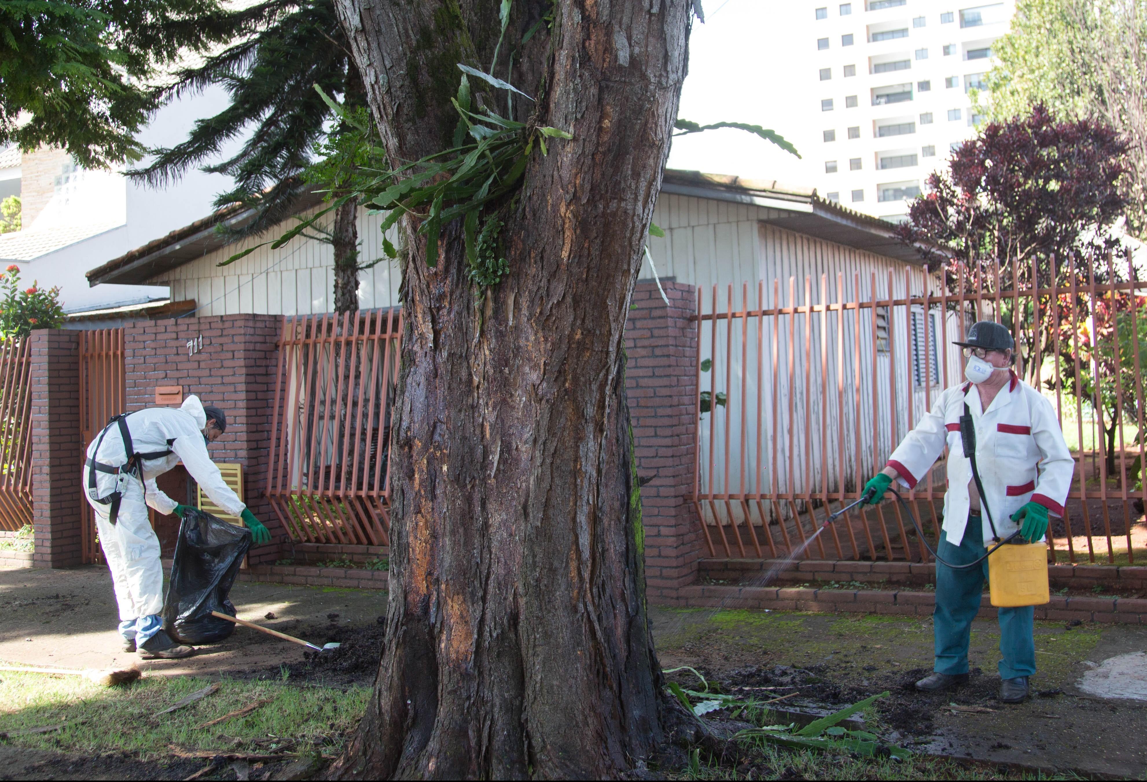 Maringá vai intensificar controle de pragas urbanas na próxima semana